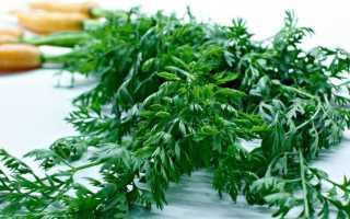 Ботва моркови: полезные свойства и противопоказания