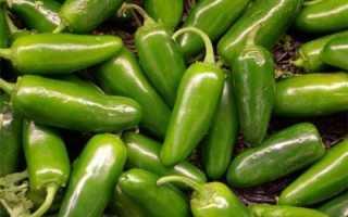 Как правильно выращивать острый перец халапеньо. Советы начинающим фермерам