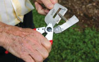 Инструмент для прививки плодовых деревьев – нож или ножницы?