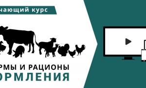 Биохимический анализ крови у коровы