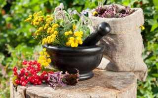 Как правильно заготавливать осенью корни лекарственных растений
