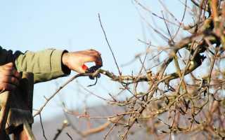 Как защитить ствол дерева после весенней обрезки