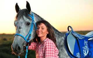 Амуниция для лошадей – из чего состоит и какие функции выполняет