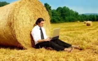 Как организовать фермерское хозяйство с нуля — нюансы открытия агробизнеса