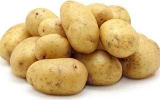 Вырастим картофель «Гала» — сорт жёлтый и вкусный