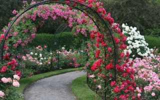 Как посадить розу весной? Когда высаживать и вносить удобрения?