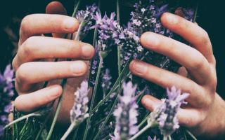 Как восстановить руки после работ с землей