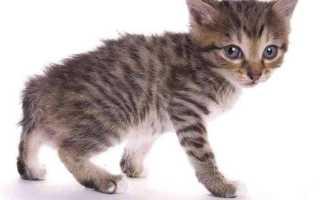 Как определить возраст кошки в домашних условиях, можно ли это сделать по зубам