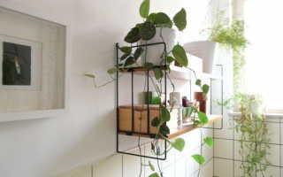 4 растения, которые комфортно приживутся в ванной комнате