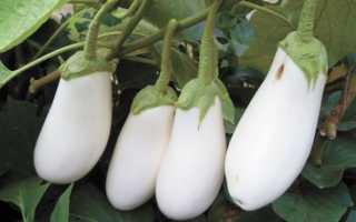 Баклажан Лебединый: описание, выращивание, уход, фото