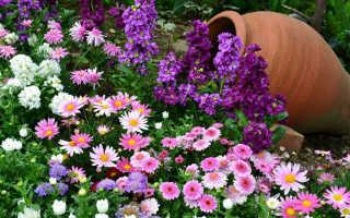 Как сажать цветы фото уход