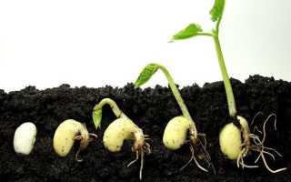 Как оживить старые семена