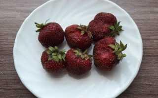 Как получить семена клубники из ягоды: правила сбора в домашних условиях