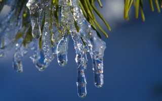 Защита хвойников от солнечных ожогов зимой