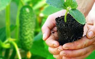 10 распространенных ошибок при выборе семян, которые приводят к разочарованию