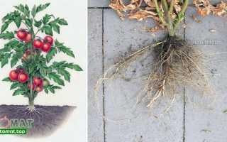 Емкости для выращивания рассады томатов