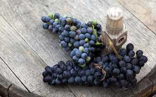 Виноград Брускам: что нужно знать о нем, описание сорта, отзывы