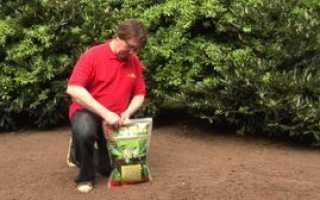 Как разбить газон и какие травы выбрать