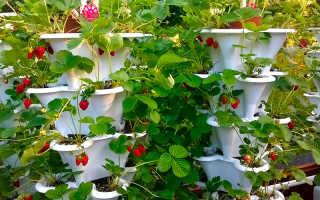 Видео: интересные способы выращивания клубники