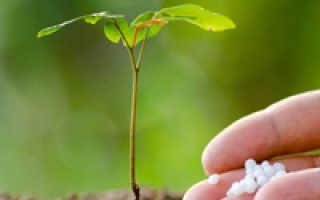 4 способа использования аквагрунта, которые защитят растения от пересыхания