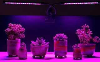 Без них никак не обойтись — фитолампы для досвечивания растений!