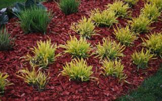 Как правильно мульчировать грядки на садовом участке?