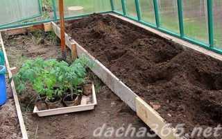 Как правильно сажать томаты в теплице 3х6 своими руками: какие сорта, когда высаживать, видео-инструкция, фото и цена