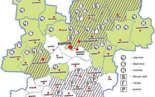 Грибы Кировской области в 2020: карта грибных мест