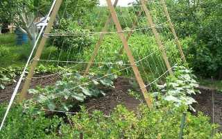 Как вырастить огурец «Нежинский»: советы агрономов