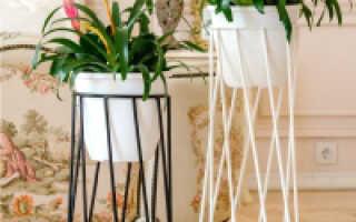 5 комнатных растений, которые лучшего всего подходят для гостиной