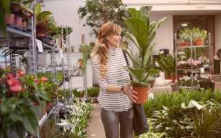 Адаптация комнатных растений после покупки. Как ухаживать за растениями после покупки?