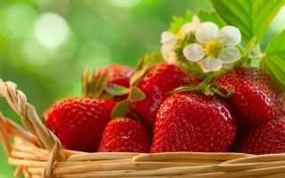 Выращивание клубники – рекомендации по посадке различными методами и правила ухода