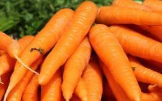 История моркови в Европе и России и странах Азии
