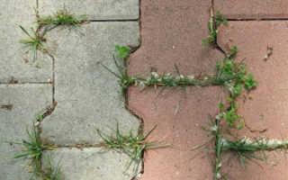 Как избавиться от травы между тротуарной плиткой