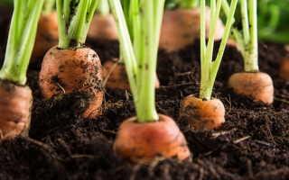 Как сажать семена в ячейки из под яиц