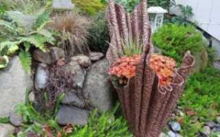 15 стильных цветочных горшков, сделанных из обычного цемента: фото пошагово