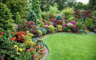 Декоративные кустарники для сада как украшение вашего участка