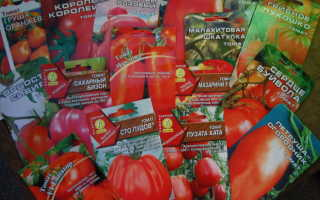 Агрофирмы: рейтинг производителей семян, отзывы