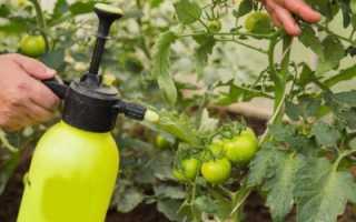Как обработать томаты трихополом