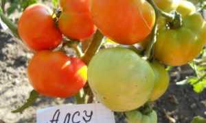 Выращиваем раннеспелый томат «Алсу»: описание сорта и характеристика помидор