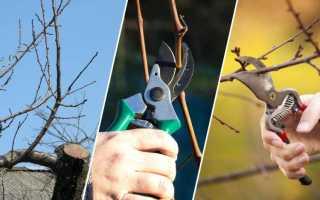 Дерево груша – посадка саженца и уход. Как обрезать грушу после посадки