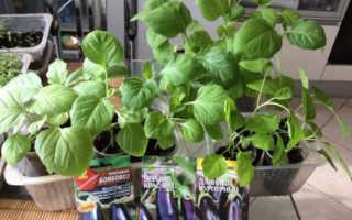 Выращивание баклажанов, в том числе уход за растениями, а также особенности в Ленинградской области, Подмосковье